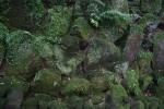 1.湯河原:万葉公園:苔岩-03D 1605q