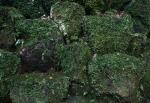 4.湯河原:万葉公園:苔岩-15D 1605qt
