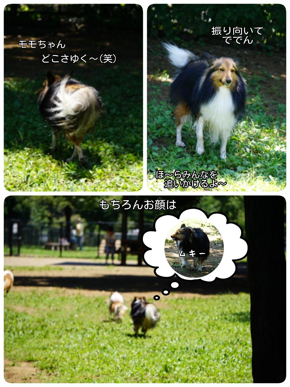 16-08-01-14-35-29-572_deco.jpg