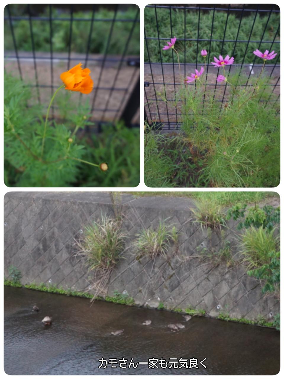16-08-03-07-17-10-675_deco.jpg