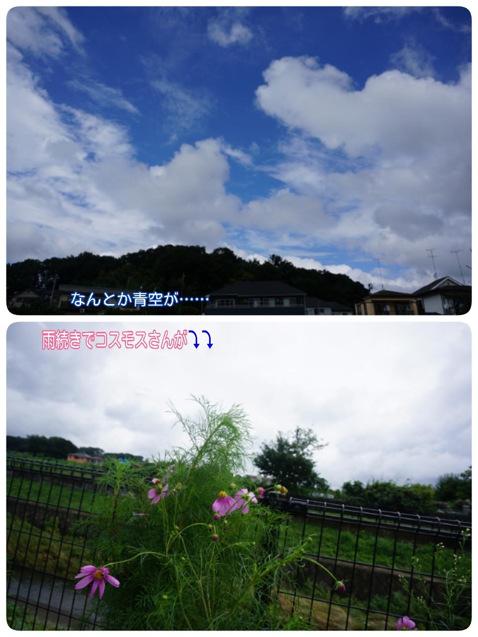 16-08-29-12-50-35-261_deco.jpg