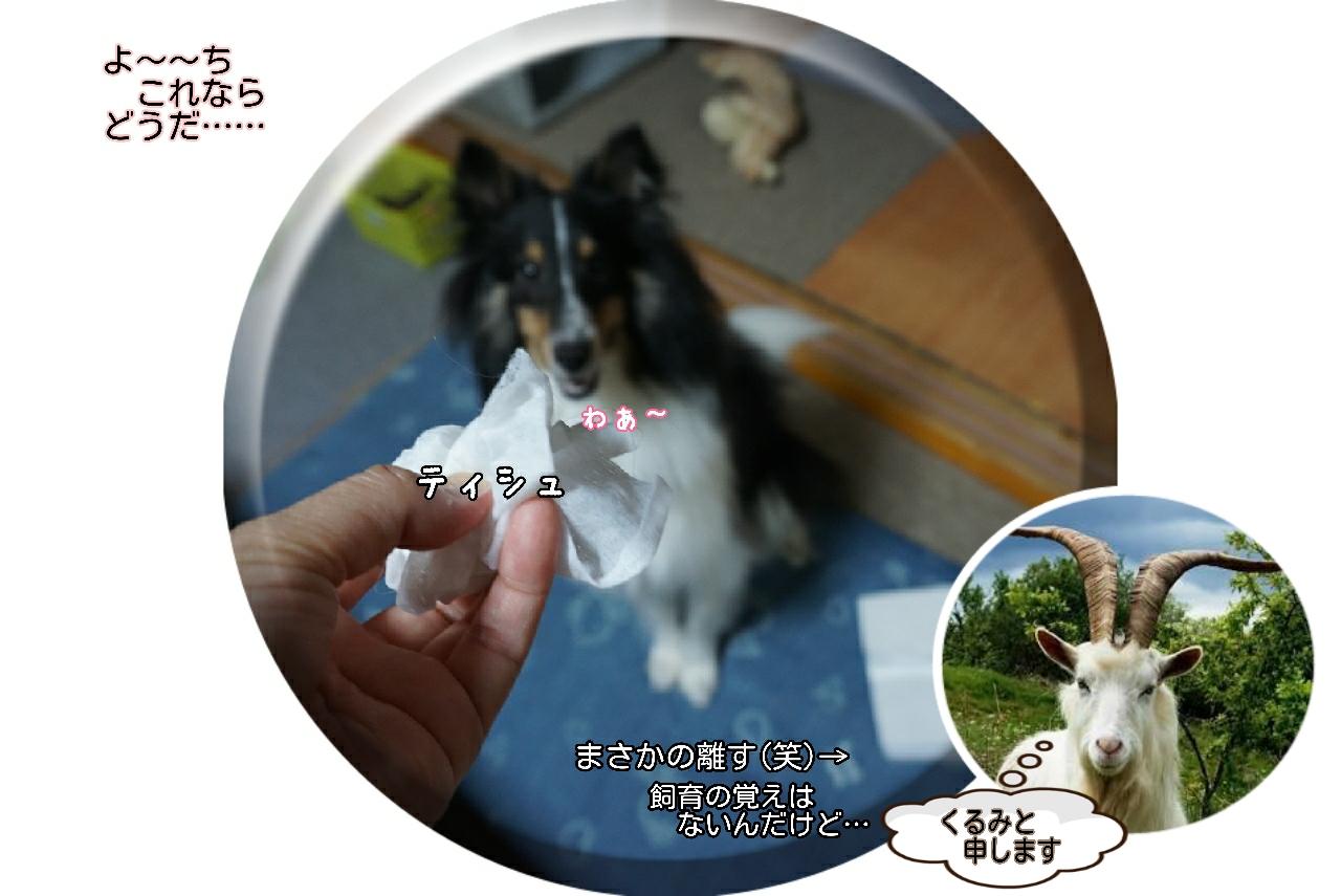 16-09-02-11-36-03-868_deco.jpg