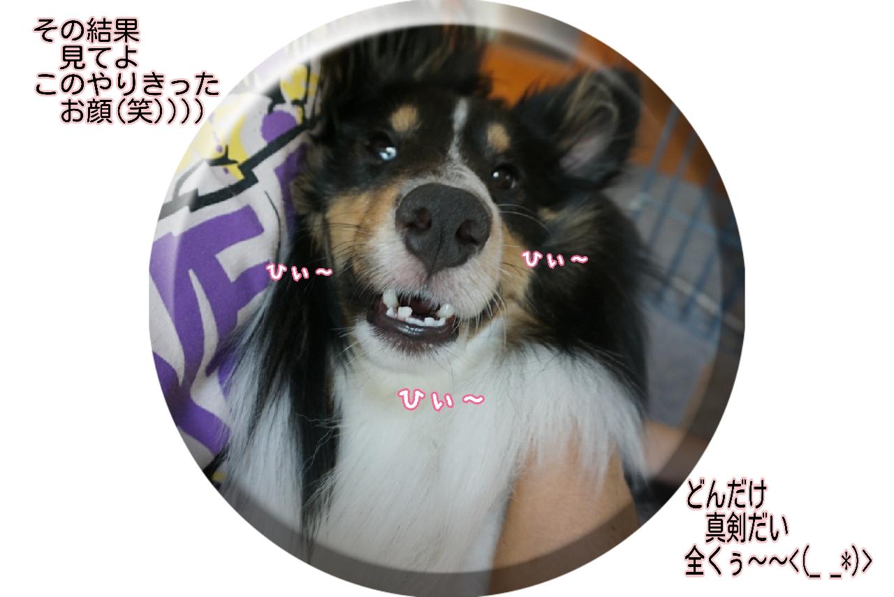 16-09-03-14-53-03-541_deco.jpg