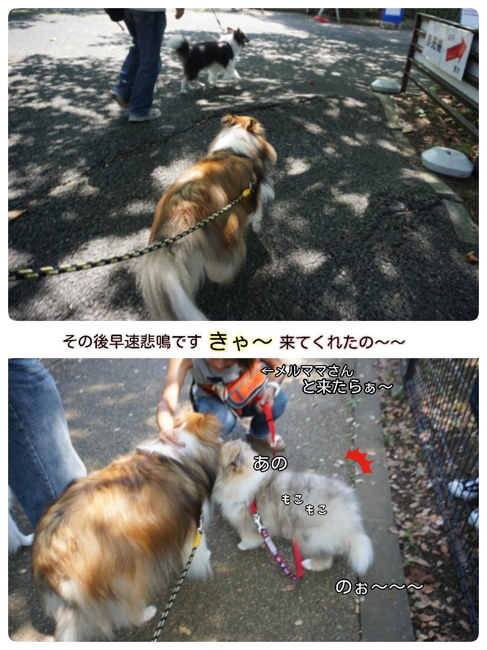 16-09-10-16-58-03-608_deco.jpg