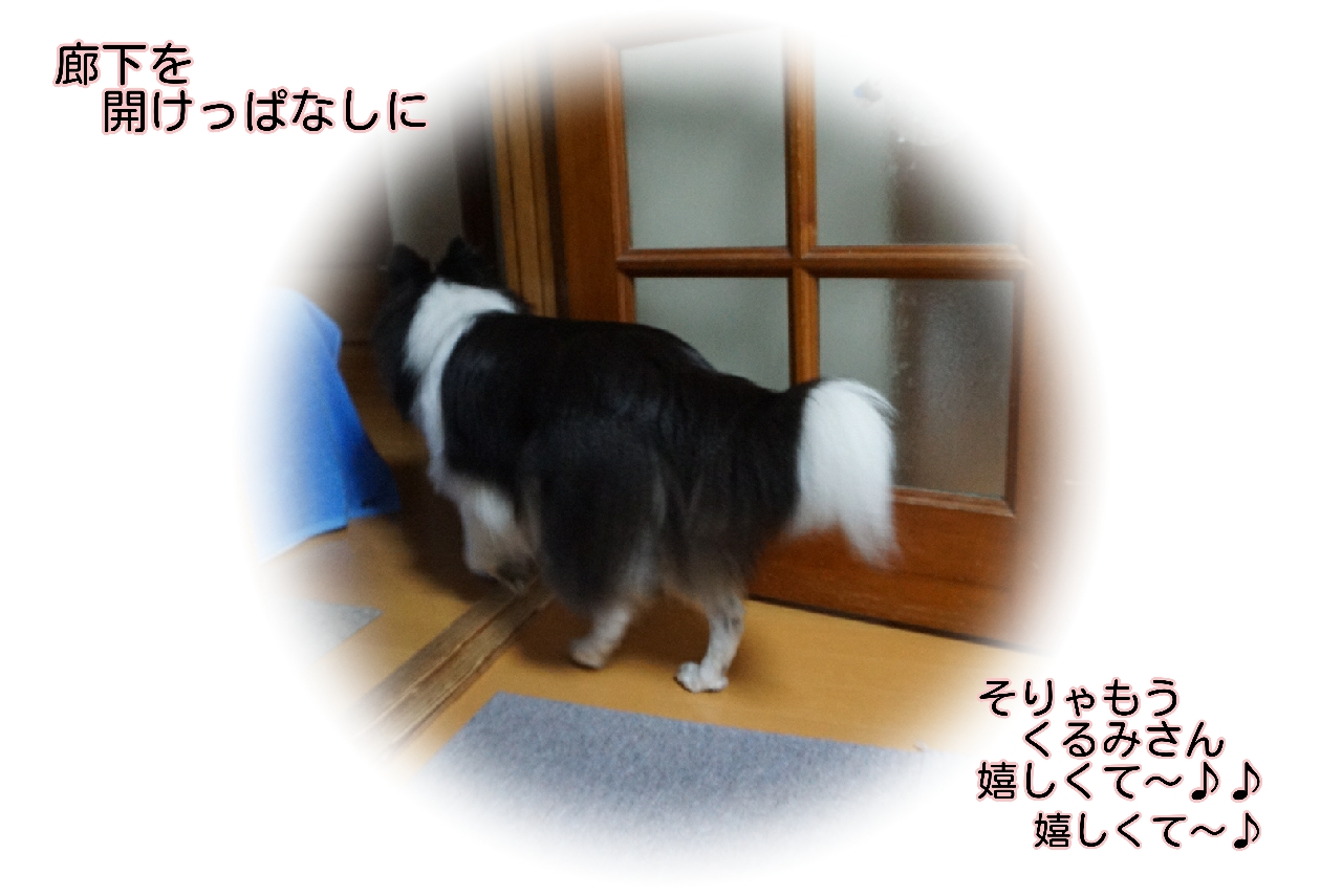 16-09-20-12-12-02-668_deco.jpg