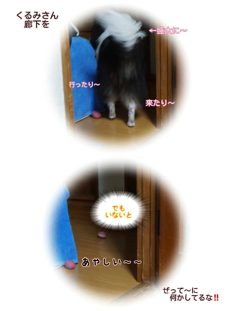 16-09-20-12-20-08-338_deco.jpg