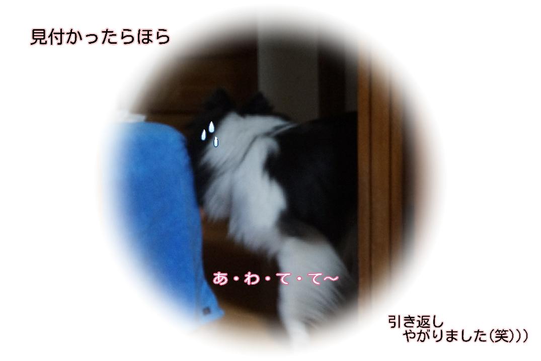 16-09-20-15-20-01-906_deco.jpg