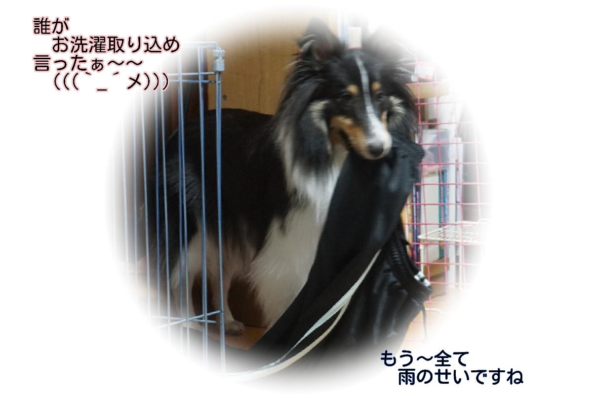 16-10-08-15-04-55-640_deco.jpg