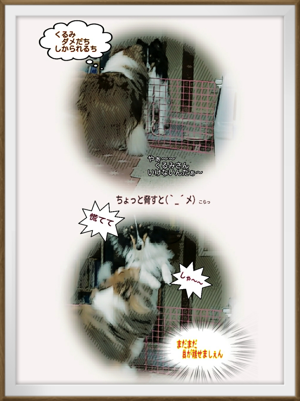 16-10-12-15-58-53-631_deco.jpg