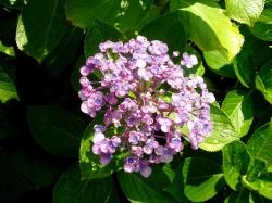 花に水20160720-3