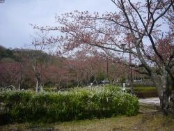 鏡山公園でアコーディオン20160412-1