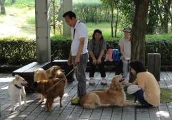 鏡山公園でアコーディオン20160714-2