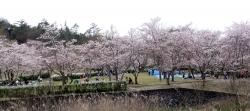 鏡山公園でアコーディオン20160408-1
