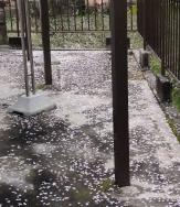 桜の花びらが20160408-2