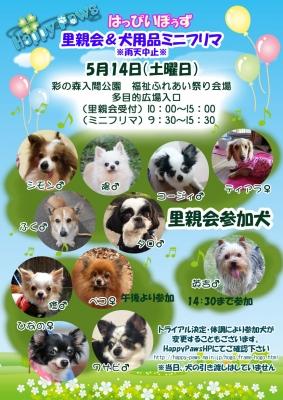 5月14日里親会参加犬