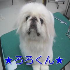 IMG_4376.jpg