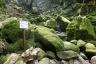 白谷雲水峡(苔むす岩)