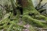 白谷雲水峡(苔むす木の根)
