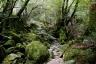 苔むす森1(白谷雲水峡)