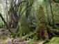 苔むす森2(白谷雲水峡)