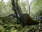 苔むす森3(白谷雲水峡)