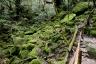 苔むす森4(白谷雲水峡)