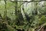 苔むす森6(白谷雲水峡)