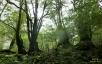 苔むす森7(白谷雲水峡)