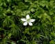 苔と花(白谷雲水峡)