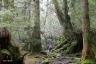 苔むす森8(白谷雲水峡)