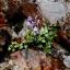 大川の滝5(花)