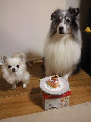 お誕生日ケーキの前で