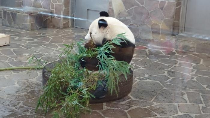 王子動物園 (15)