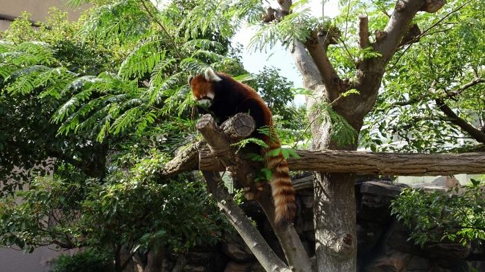 王子動物園 (12)
