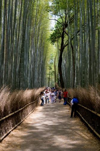20 - Arashiyama Bamboo Grove