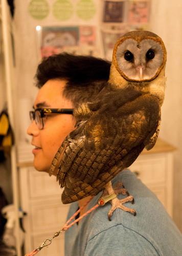 32 - Owl Cafe