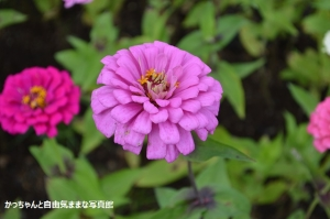 DSC_4403.jpg