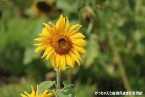IMG_1605.jpg
