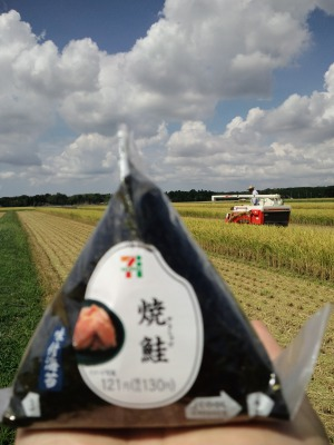 稲刈り2016