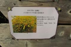 angyobara160417-109.jpg