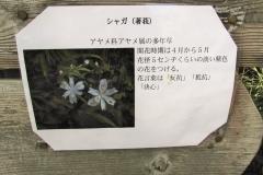 angyobara160417-110.jpg
