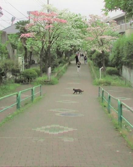 hanamizuki160424-101.jpg