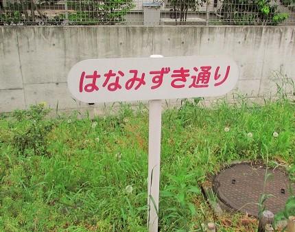 hanamizuki160424-102.jpg