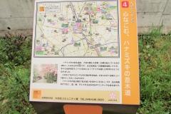 hanamizuki160424-103.jpg