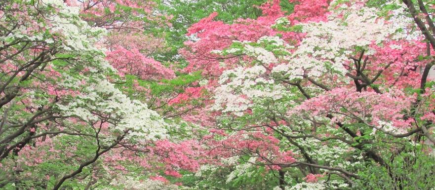 hanamizuki160424-108.jpg