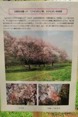 hananokai160416-120.jpg