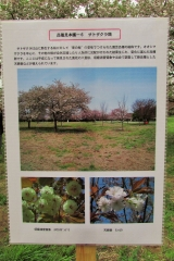 hananokai160416-122.jpg