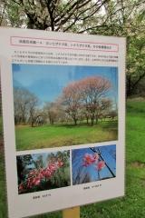 hananokai160416-123.jpg