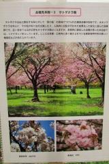 hananokai160416-134.jpg