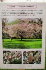 hananokai160416-142.jpg